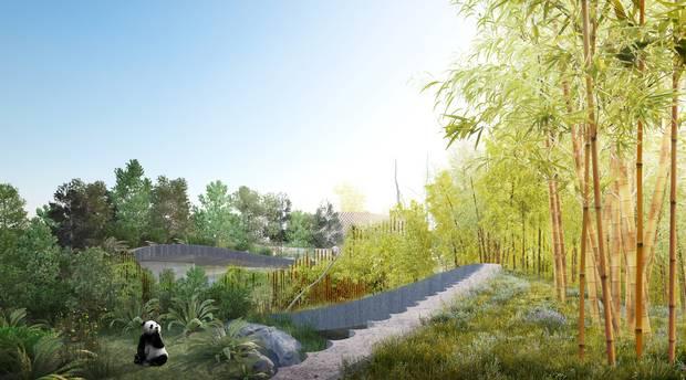 """»Vi har arbejdet med to forskellige landskabstyper, """"tågeskov"""" og """"bambusskov"""", som begge er kendetegnende for pandaens naturlige habitat. De to skove ligger på hver sin bakke i anlægget. Skovene står beplantnings- og farvemæssigt i kontrast til hinanden, på samme måde som yin-yang figuren, og samtidig formidler de historien om dyrets vandring op og ned ad bjergsiden i løbet af året.« Foto: BIG Bjarke Ingels Group"""